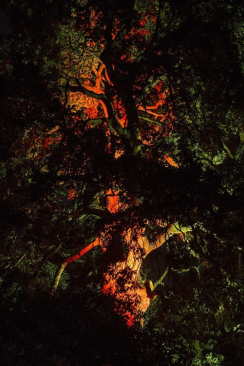 Itamar Freed, Burning Tree 2016, Inkjet print on archival paper