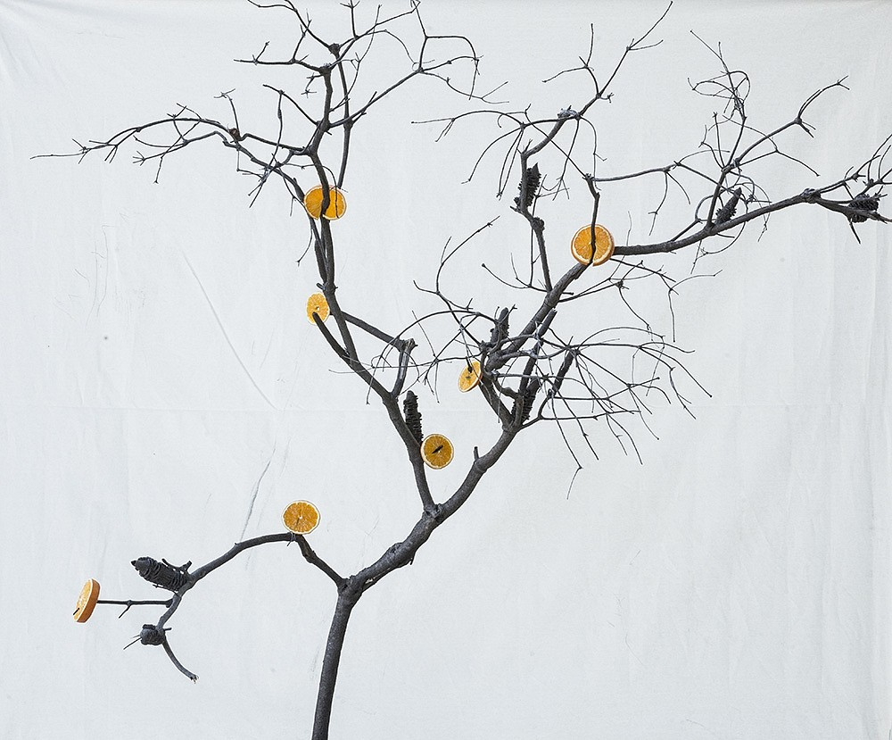 Itamar Freed & Kristina Chan, Orange Tree 2019, Photography, inkjet pigment print on archival Kozo Japanese paper