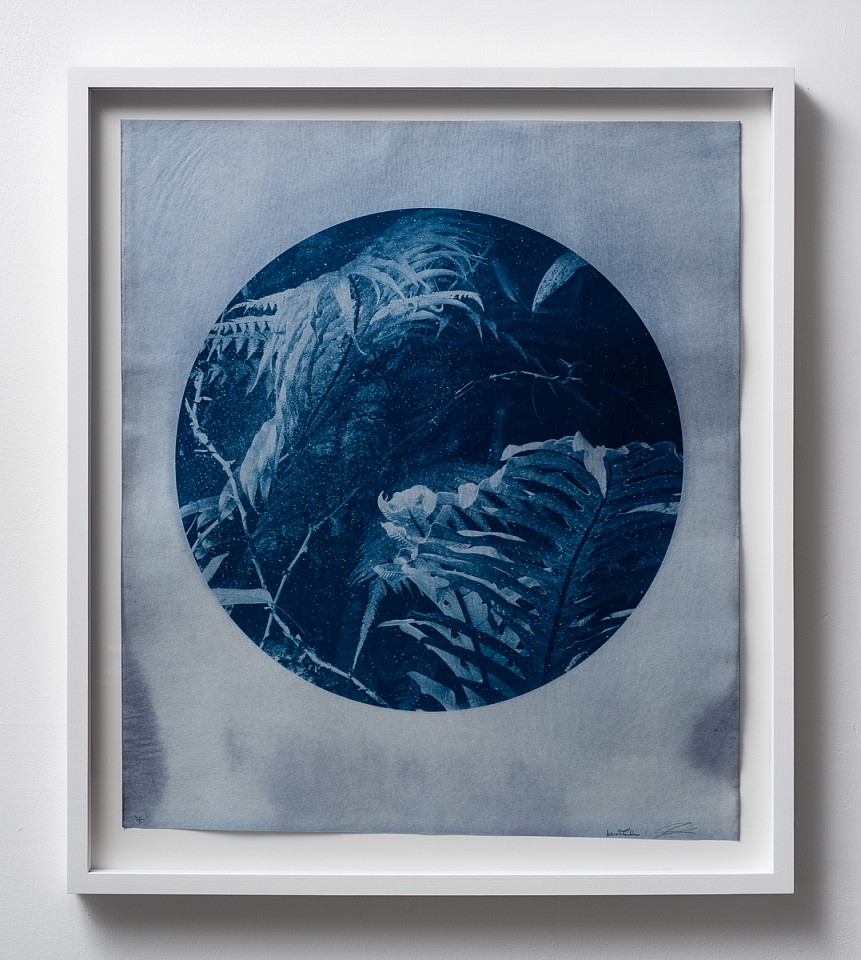 Itamar Freed, Aloe Vera I 2019, Cyanotype on Tosa Wasa handmade Japanese paper