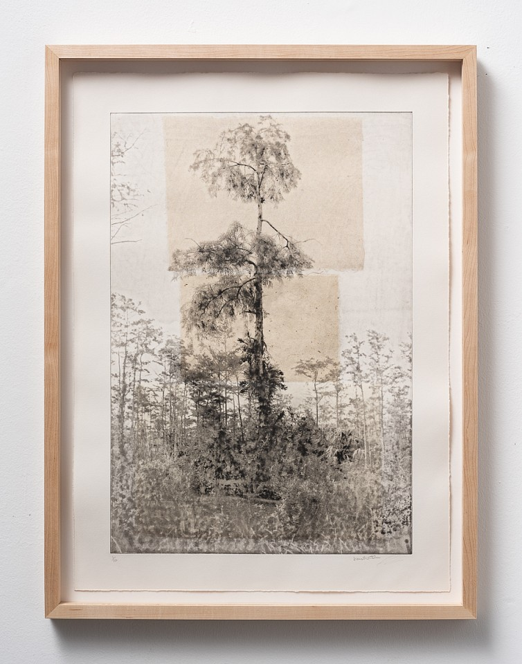 Itamar Freed, Cypress Tree1 2019, Etching with chine colle on Zerkyl Natural