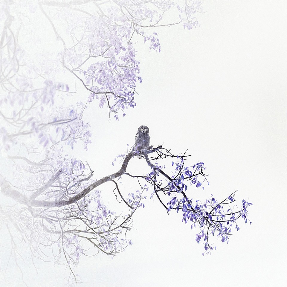 Itamar Freed, Barred Owl 2019, Photography, inkjet pigment print on archival Kozo Japanese paper